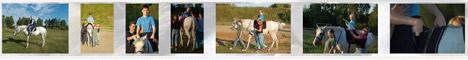 Иппотерапия - лечебная верховая езда (ЛВЕ)