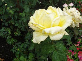 Толгский монастырь - И снова цветы