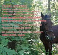 РЕЛАКС-ПРОГУЛКА  - ЗАПИСЬ- 89023164981