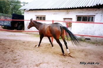 Иппотерапия в Иванове и Ивановской области - Дневник иппотерапевта - Понимание поведения лошадей.