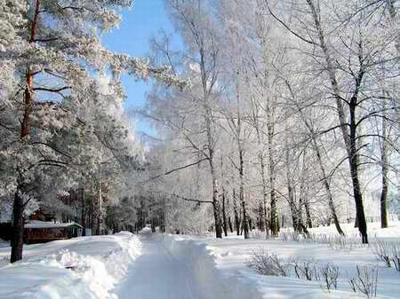 Иппотерапия в Иванове и Ивановской области - Дневник иппотерапевта - Первого января мы ездили на конную прогулку.