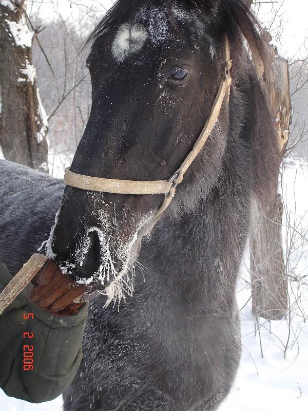 Лошади - КЭП