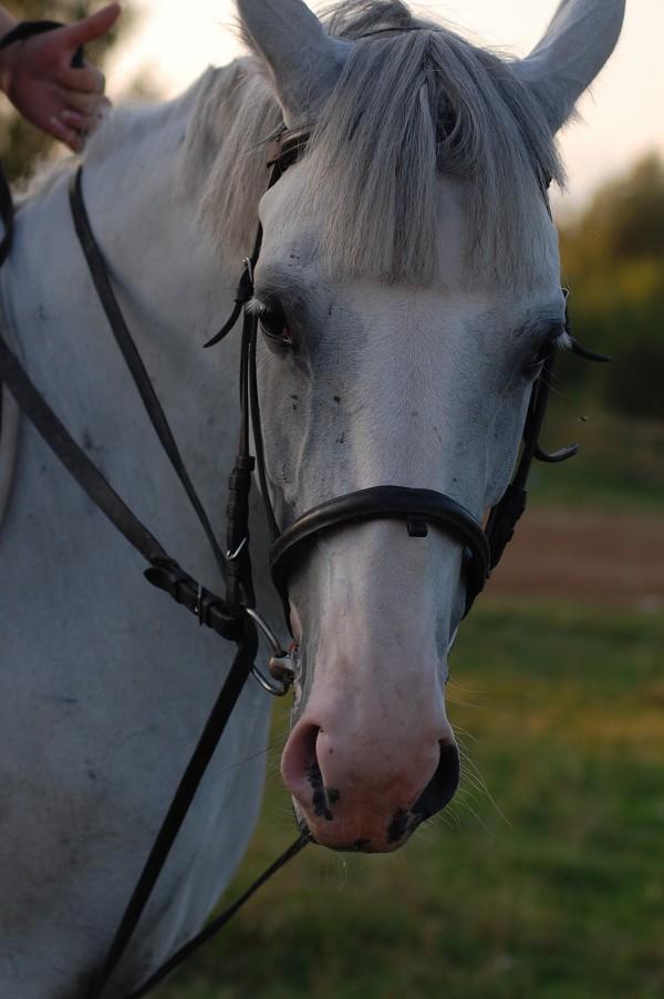 Лошади - Ника