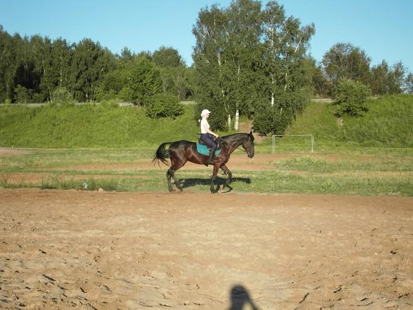Верховая езда / Конный спорт - Выездка