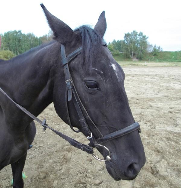 Лошади - Манера (Маня, Манюша)