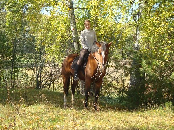 Прогулки на лошадях - прогулка на лошадях