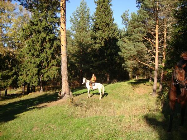 Прогулки на лошадях - конные прогулки
