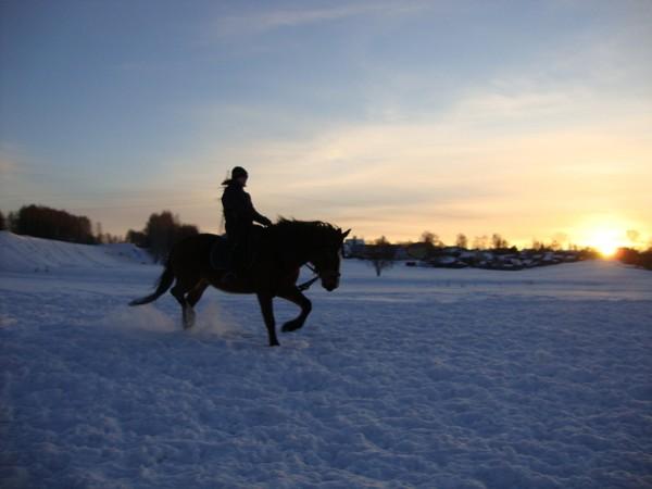 Верховая езда / Конный спорт - Верховая езда. Женя на Хохме