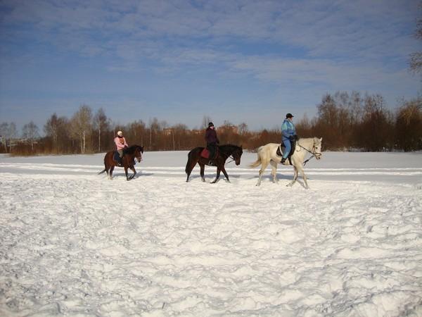 Верховая езда / Конный спорт - Верховая езда. Смена.