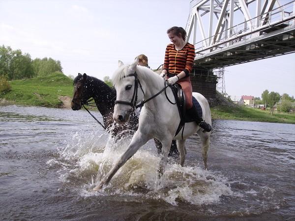 Верховая езда / Конный спорт - Кто больше?...