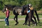 Иппотерапия и лечебная верховая езда (ЛВЕ) - Артур