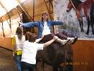 Иппотерапия и лечебная верховая езда (ЛВЕ) - Иппотерапия