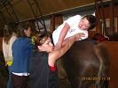 Иппотерапия и лечебная верховая езда (ЛВЕ) - Иппотерапия. Обучение