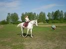 Верховая езда / Конный спорт - На Нике