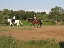 Верховая езда / Конный спорт - Тренировка.