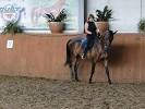 Верховая езда / Конный спорт - Тренировка на Соне