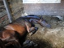 Лошади - Паша. Отдыхает.