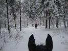 Прогулки на лошадях - Прогулка по зимнему парку