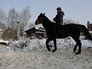 Верховая езда / Конный спорт - мы только учимся)))