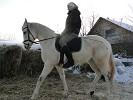 Лошади - Лена и Ника
