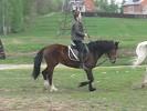 Верховая езда / Конный спорт - Аня на Хохме