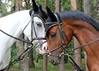 Лошади - Водопад и Ника