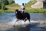 Верховая езда / Конный спорт - Купание. Вера на Хохме