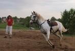 Лошади - Небольшая пробежка перед занятиями
