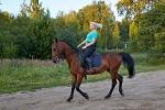 Верховая езда / Конный спорт - вечерняя тренировка