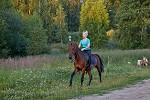 Верховая езда / Конный спорт - Тренировка. Галоп