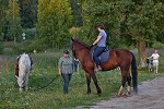 Верховая езда / Конный спорт - Тренировка. Лето 2017