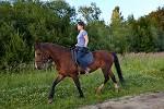 Верховая езда / Конный спорт - Ника на Хохме. Рысь