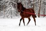 Лошади - Наш малыш Аристократ