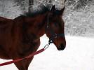 Лошади - На прогулке.