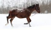 Лошади - Вот такая снежная весна, но это не мешает тренировкам)