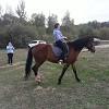 Иппотерапия и лечебная верховая езда (ЛВЕ) - Подготовка к соревнованиям. Лиза на Хохме