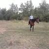 Иппотерапия и лечебная верховая езда (ЛВЕ) - На любимых занятиях
