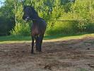 Лошади - Прелесть