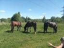 Лошади - Пасемся